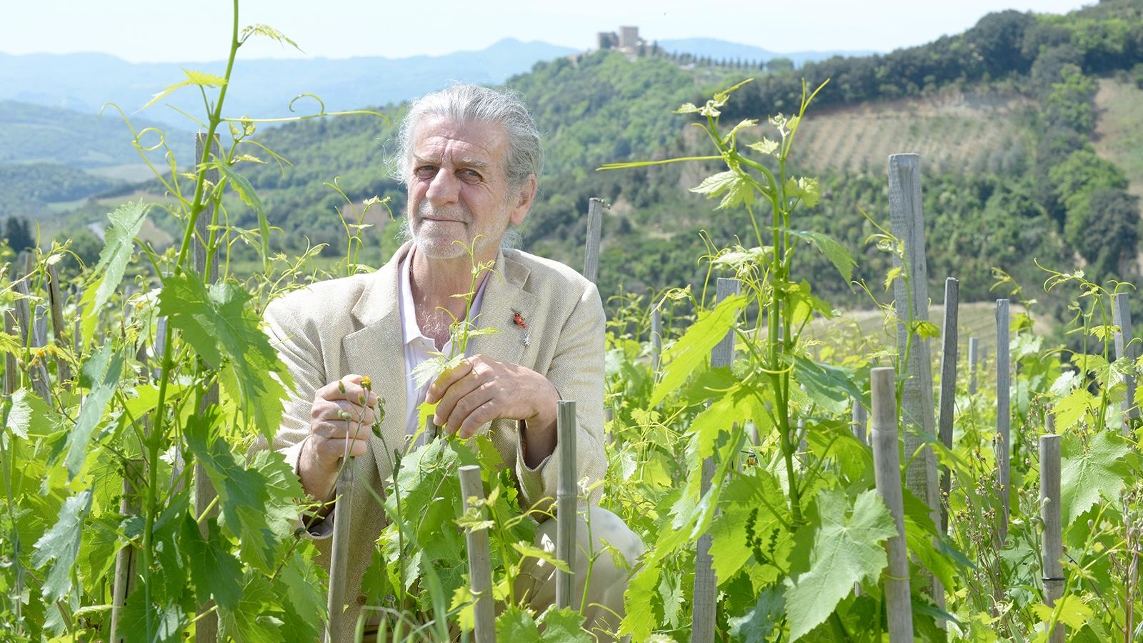 Francesco Illy has planted Sangiovese at densities higher than 25,000 vines per acre for his sought-after Rosso di Montalcino Bonsai.