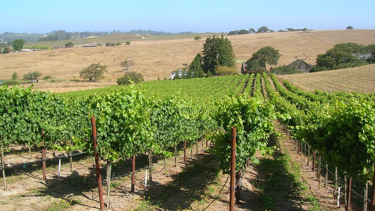 10 Distinctive California Pinot Noirs