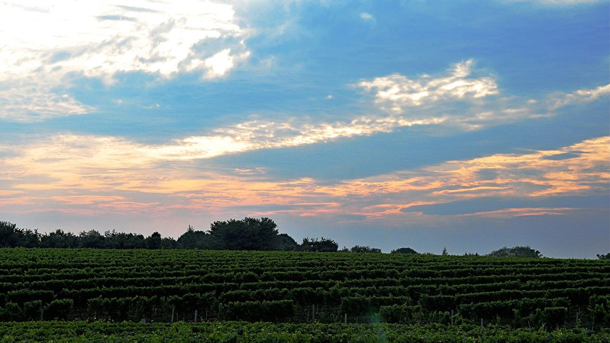 10 Diverse Wines From Long Island