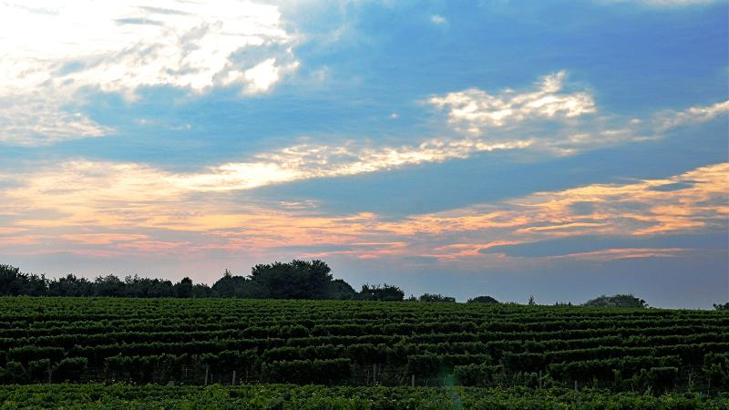 The summer is over, but don't forget about the Hamptons! Wölffer Estate's wines are worthy of year-round enjoyment.