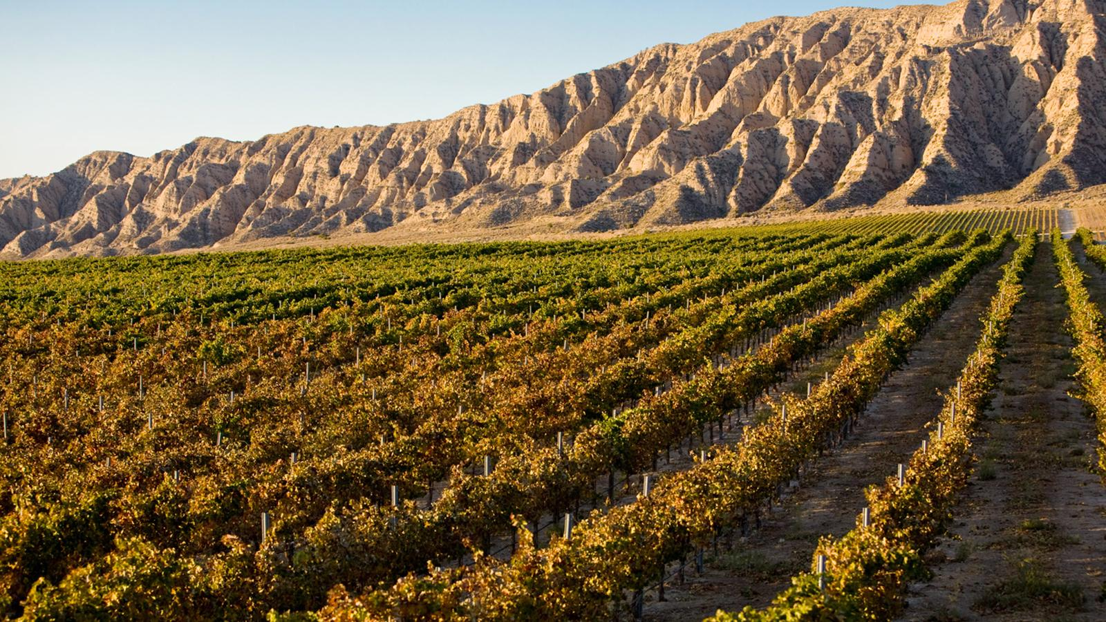 The Arroyo Grande Valley is home to Laetitia's Pinot Noir vineyards.