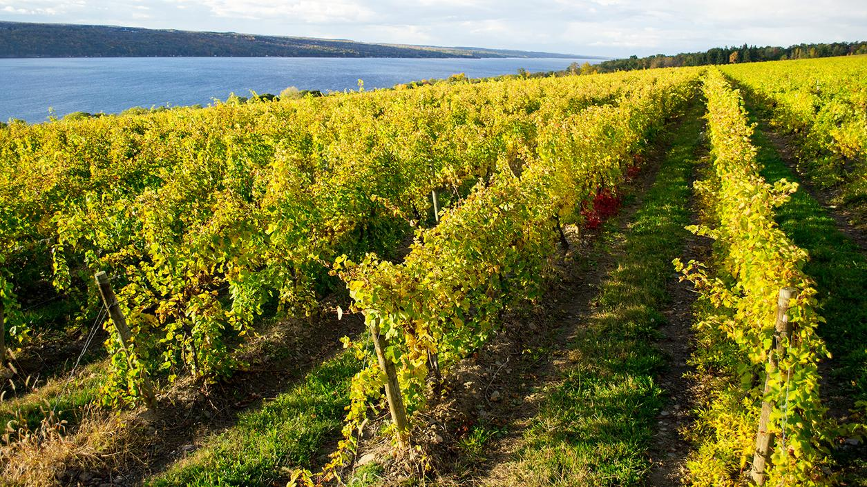 16 Intriguing Finger Lakes Rieslings