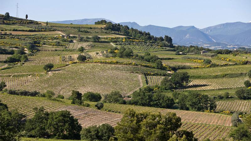French Wine Authorities Add Three New Appellations to Southern Rhône Valley