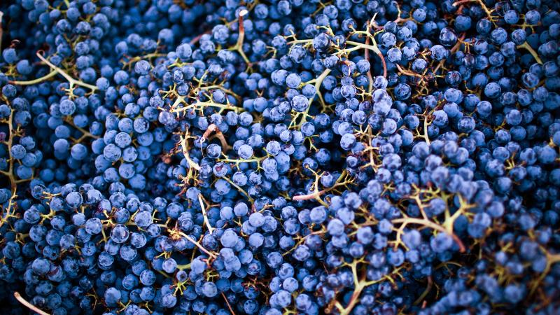Cabernet Sauvignon is the offspring of Cabernet Franc and Sauvignon Blanc and dates back to at least the 18th century, experts believe.