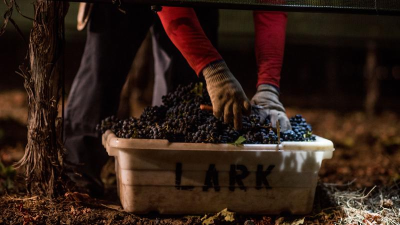 Wine Harvest Report 2016: Napa Valley's Cabernet Run Continues