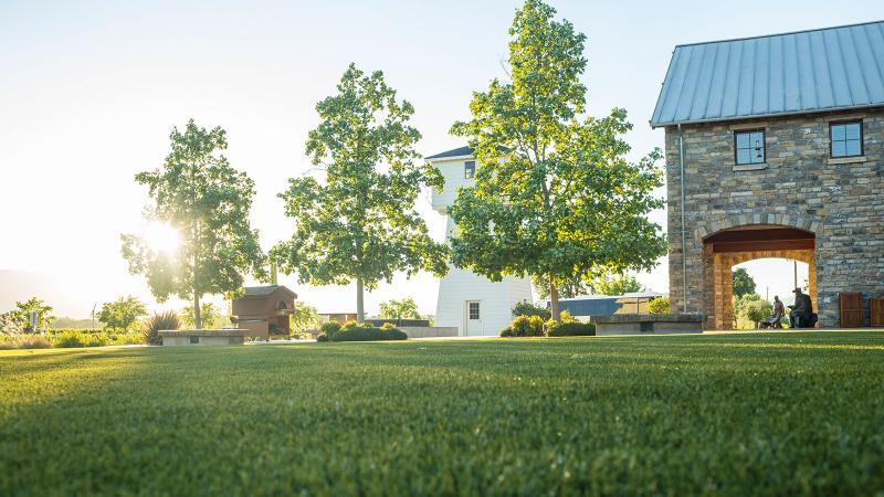 At its Oakville estate, Silver Oak replaced its grass lawn with natural-looking turf, reducing its water use by about 1 million gallons a year.
