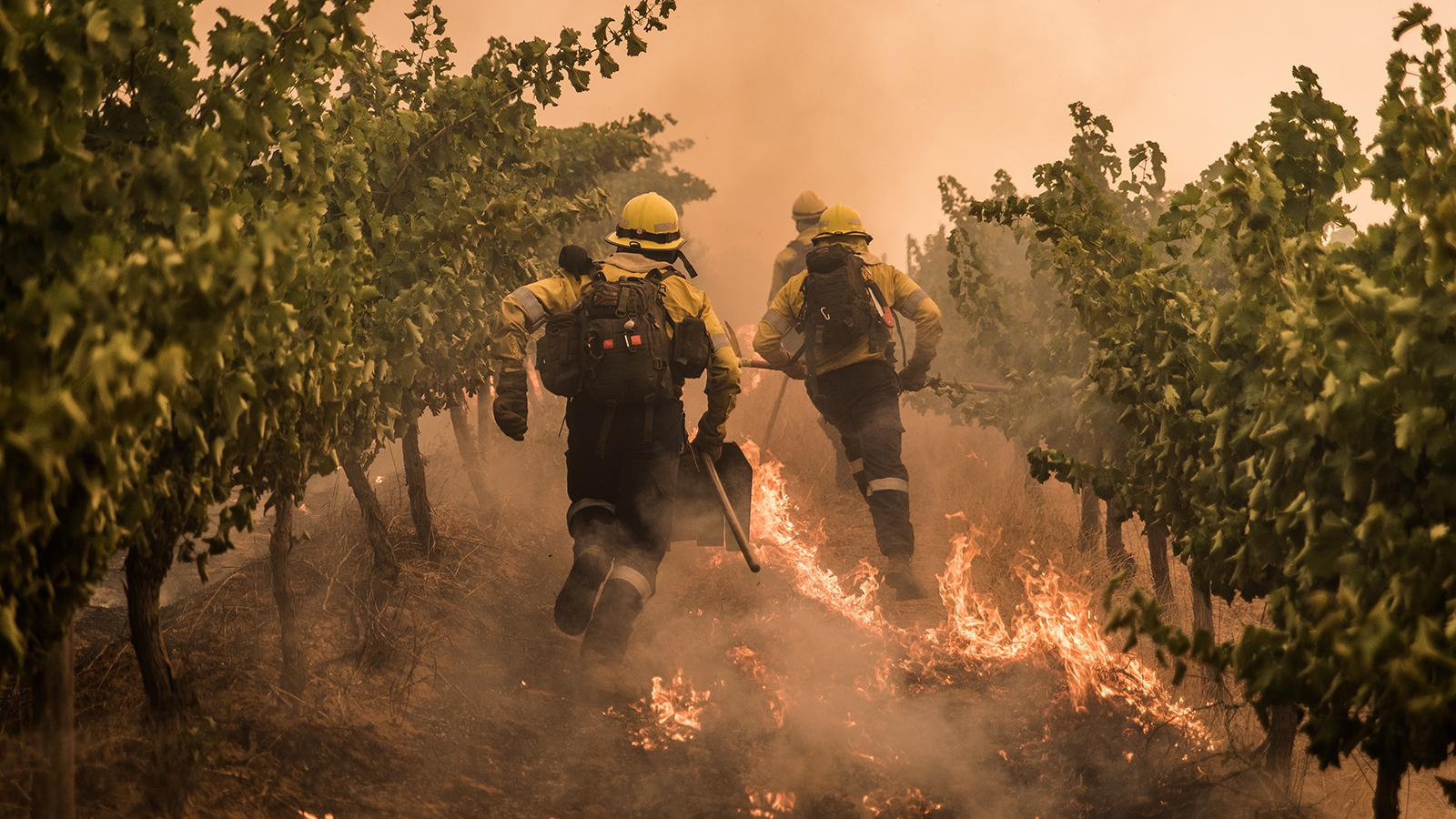 Winemakers in South Africa's Stellenbosch Assess Wildfire Damage