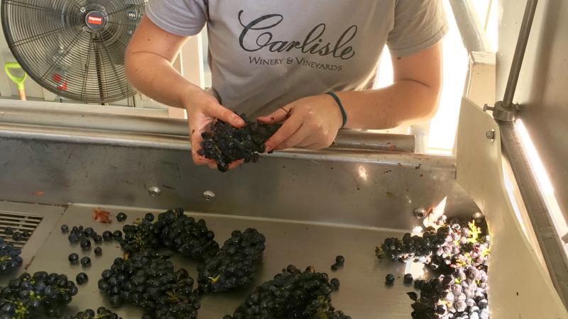 Wine Harvest Report 2016: Sonoma Winemakers Wrap the Season on a High Note