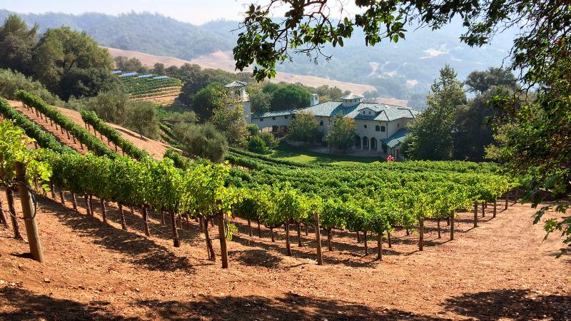 Some of Villa Sorriso's vines lie just uphill from the large home on Mount Veeder.