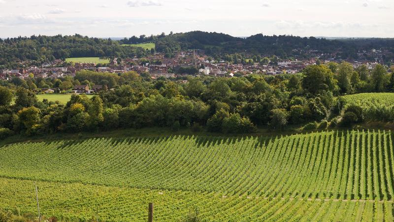 What's the Future for U.K. Wine Industry? Study Finds Climate Change Brings Both Promise and Risk