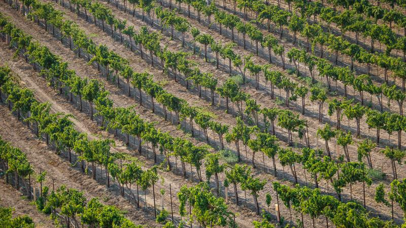 California's drought has possibly impacted Paso Robles more than any other fine-wine region.