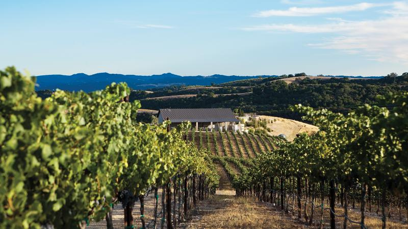 Calcareous' limestone soils yield a pure yet rustic expression of Cabernet Sauvignon.