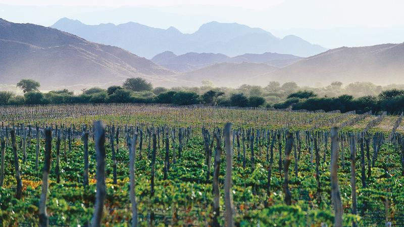 10 Argentine Malbec Values That Deliver