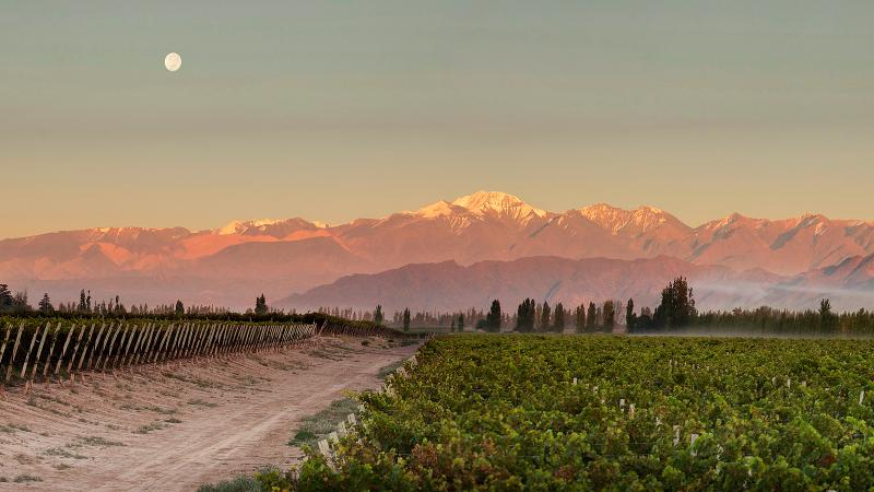 23 Diverse Wines from Argentina