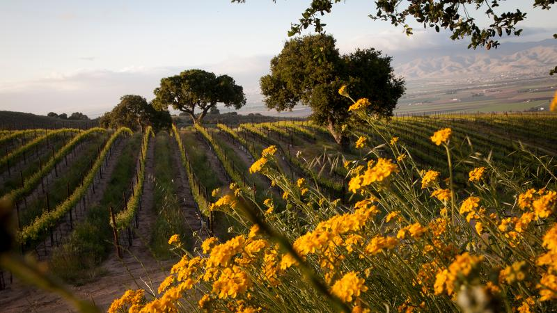 Roar's Pinot Noir comes from a vineyard co-owned by fellow Santa Lucia Highlands growers the Pisoni family.