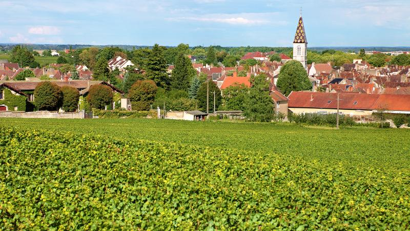 Though parts of the Côte de Nuits faced hail damage and fruit flies, many of its appellations, such as Nuits-St.-George, produced top-quality 2014 reds.