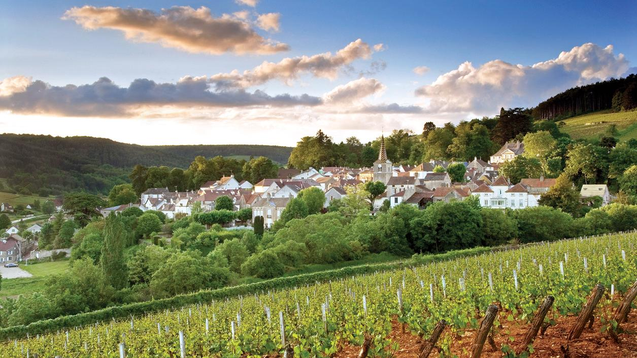 2015 Burgundy Preview