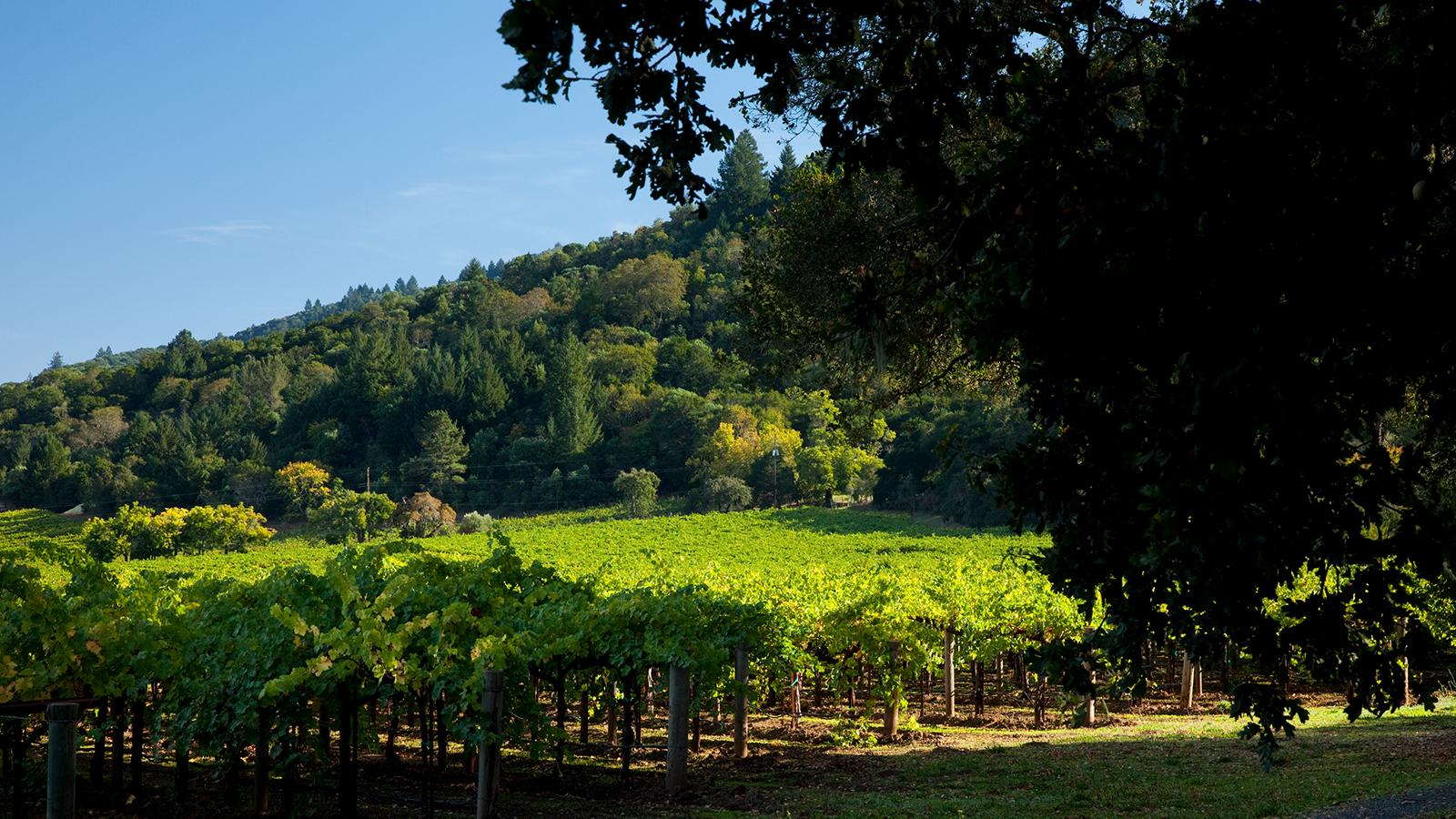 Martha's Vineyard has been the source of some of Napa's most distinct Cabernets for more than 40 years.