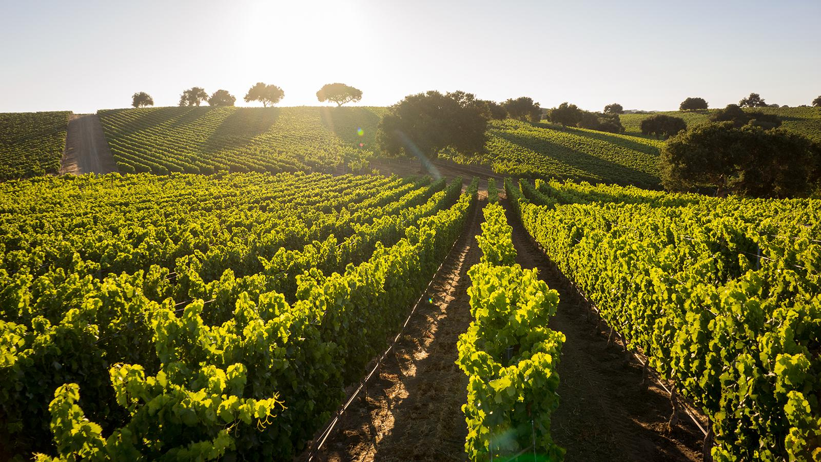Santa Barbara vintners are preparing for whatever challenges may be on the horizon.