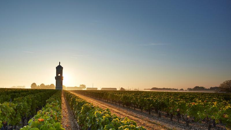 A tower topped with the Virgin Mary rises from Haut-Batailley's main parcel of vineyards.