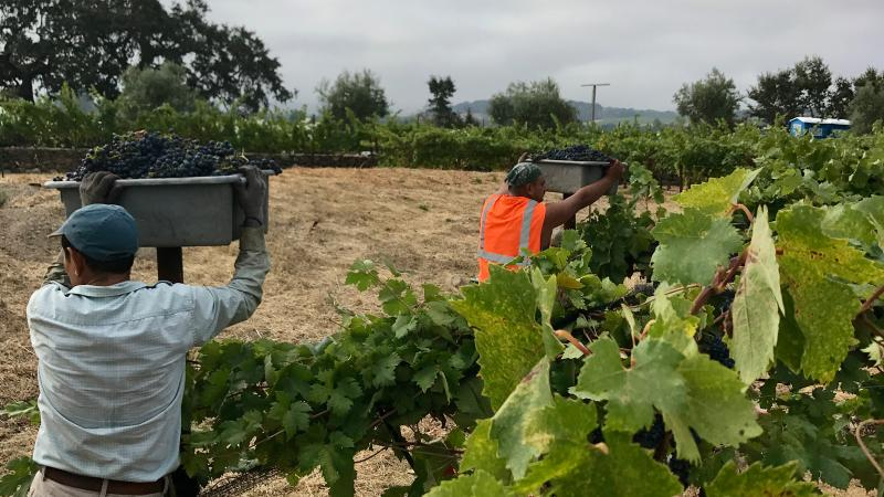 finest selection 65aee 15938 Napa and Sonoma Vintners Face Record Heat and a Labor Shortage