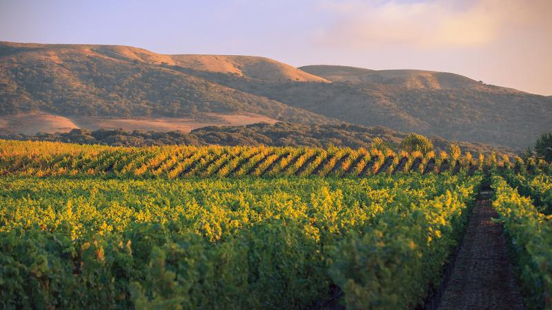 The deal includes Brewer-Clifton's 60 acres of vines in the Sta. Rita Hills.