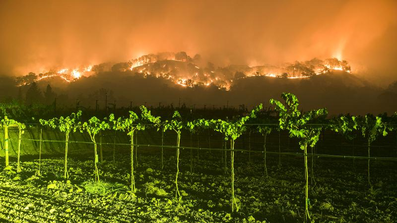 Flames burn on the ridges above Napa vineyards.