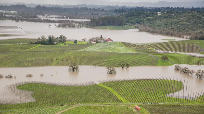Floodwaters filled vineyards near the Russian River in Sonoma County.