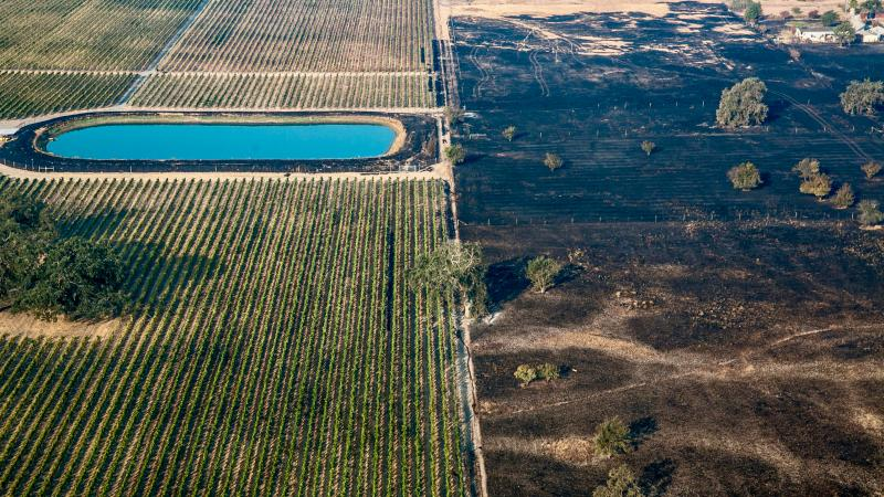 Where the wildfires raged, forest and brush burned, while vineyards largely avoided destruction.