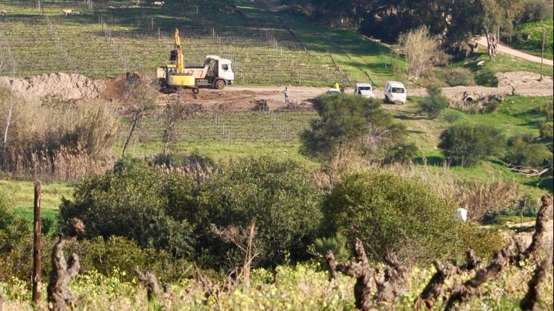 Mining company vehicles in a vineyard in Swartland.
