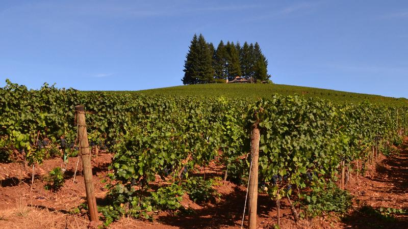 Prince Hill features a sloping landscape and the red soils that make the Dundee Hills famous.