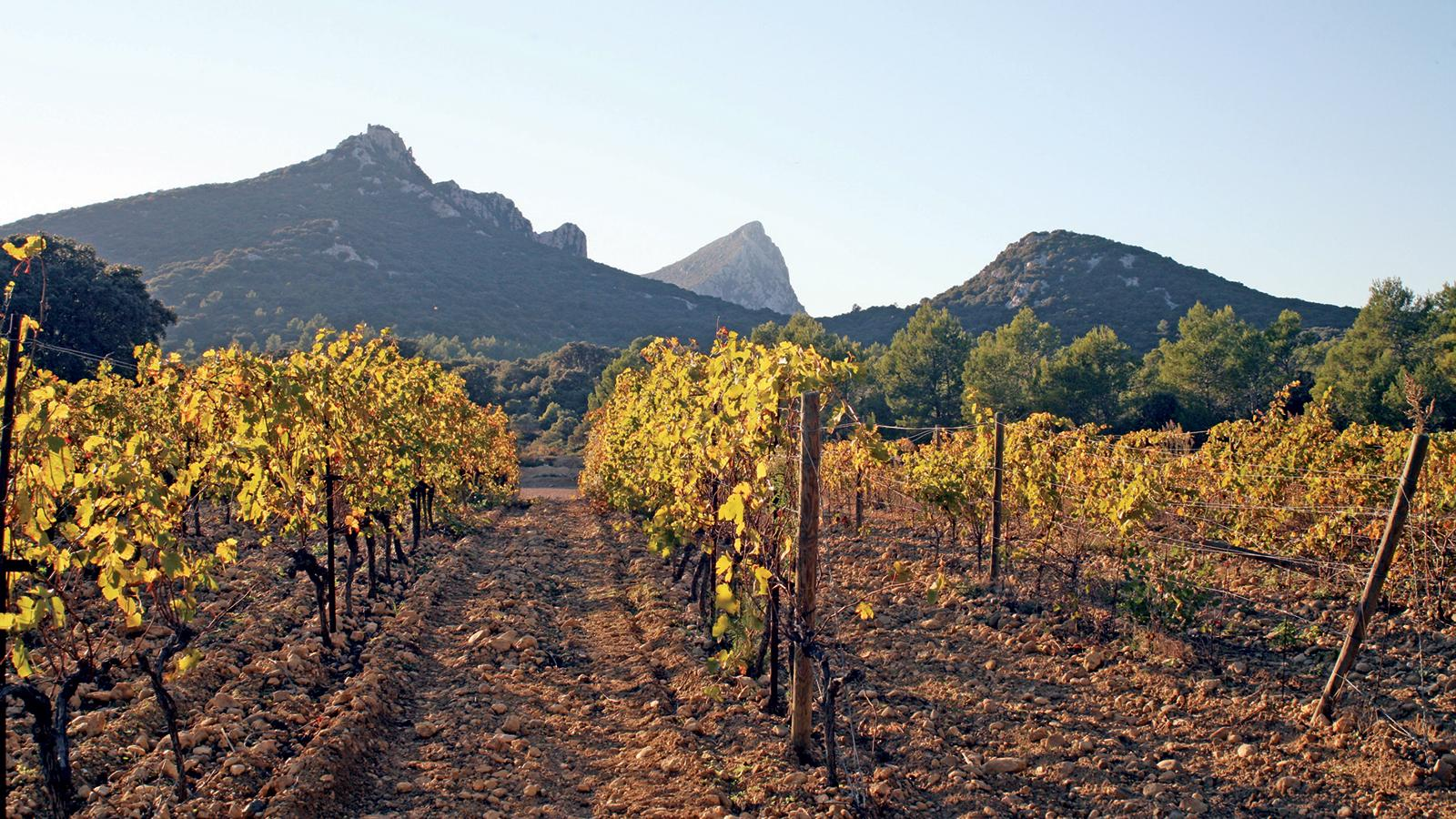 The Pic St.-Loup mountain looms over the vineyards of this Languedoc subregion.