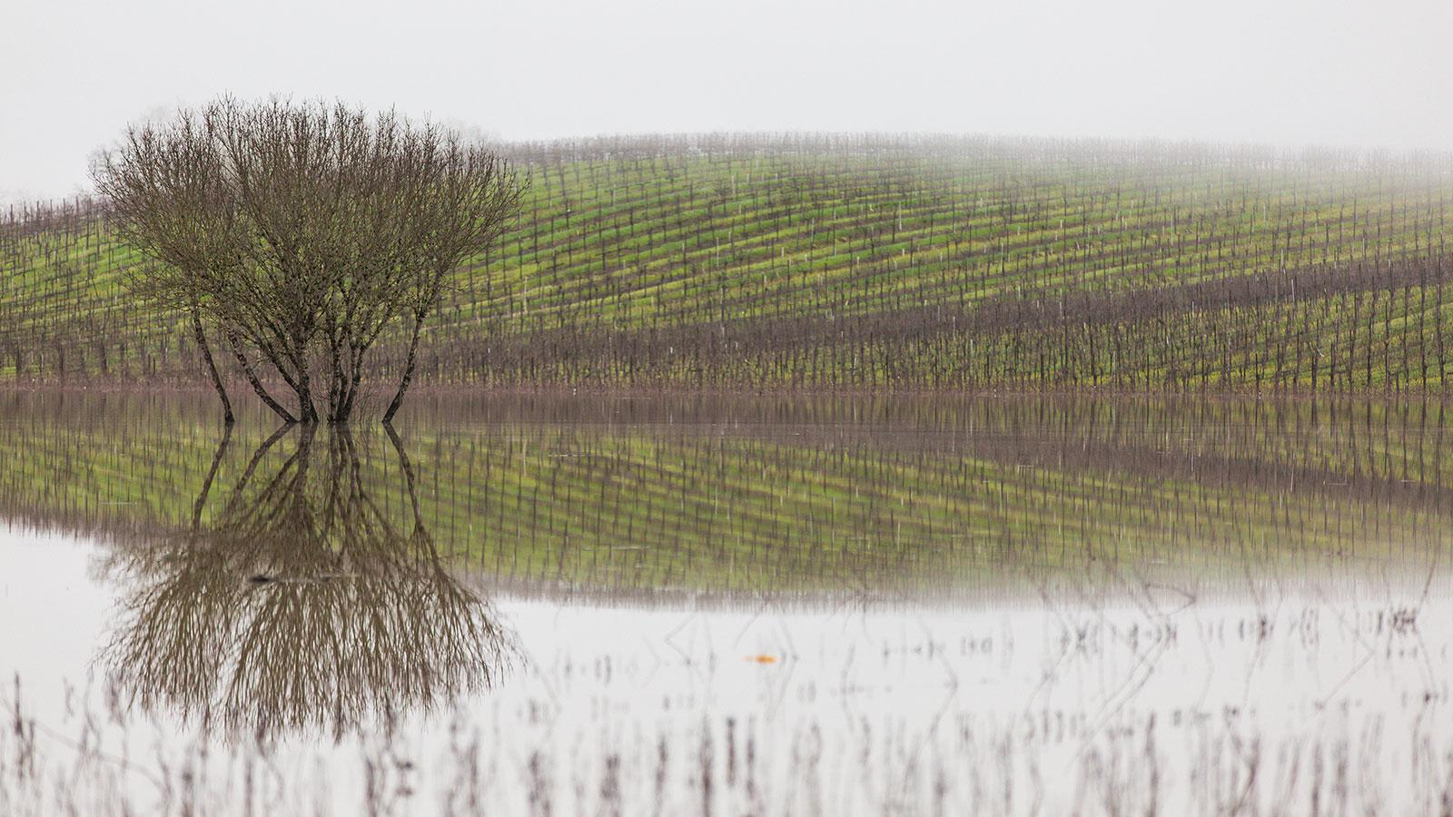 Sonoma's Russian River spilled over into nearby vineyards this week.