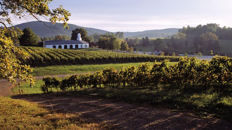 The visionary Zonin family from Italy converted the Barboursville property into a winemaking estate.