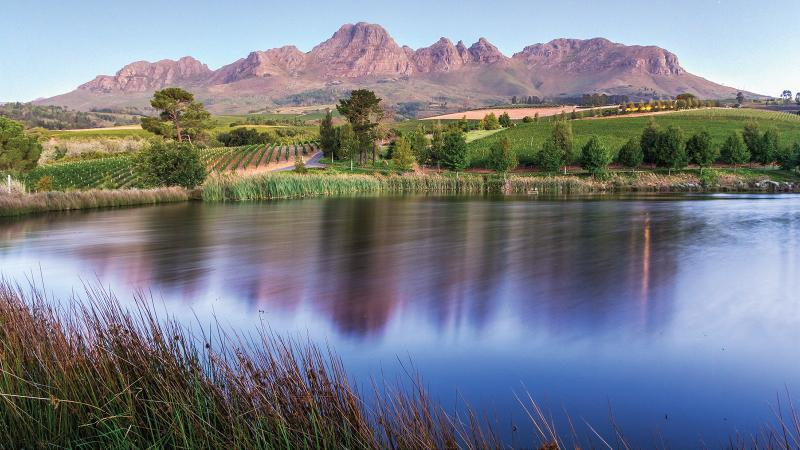 Ernie Els, a golfer turned vintner, set his sights on his native South Africa for his wine venture.