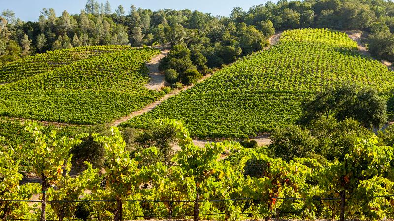 Pedroncelli makes a fleshy, aromatic Sauvignon Blanc from their vineyards in Sonoma.