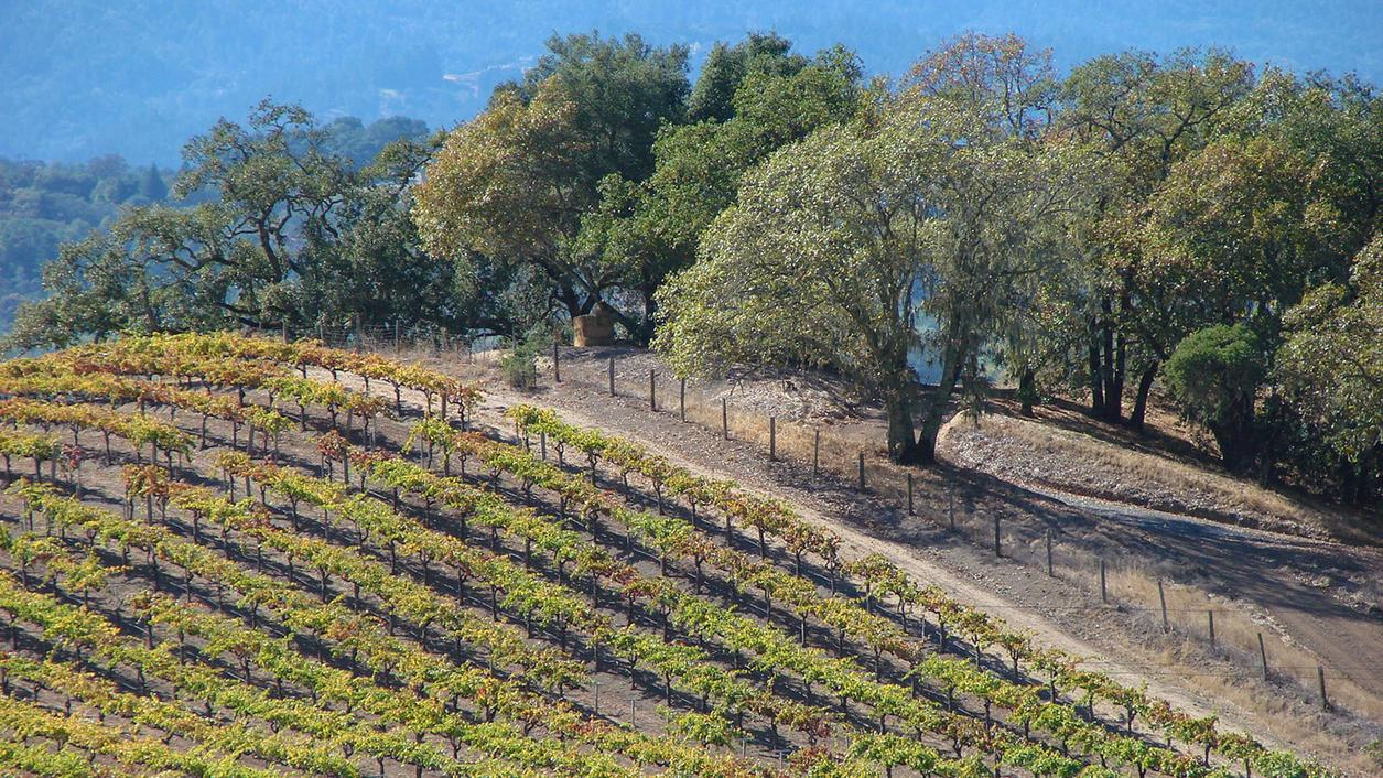 13 Expressive California Chardonnays