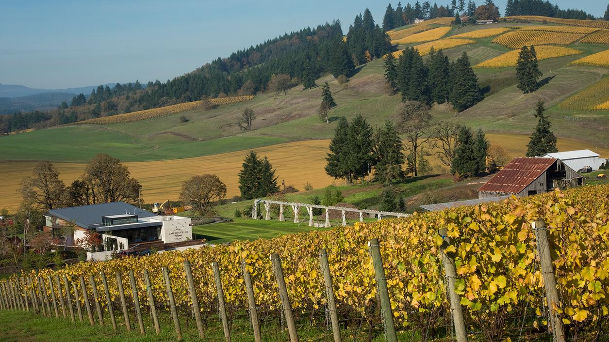 18 Oregon Wines for a Colorful Fall