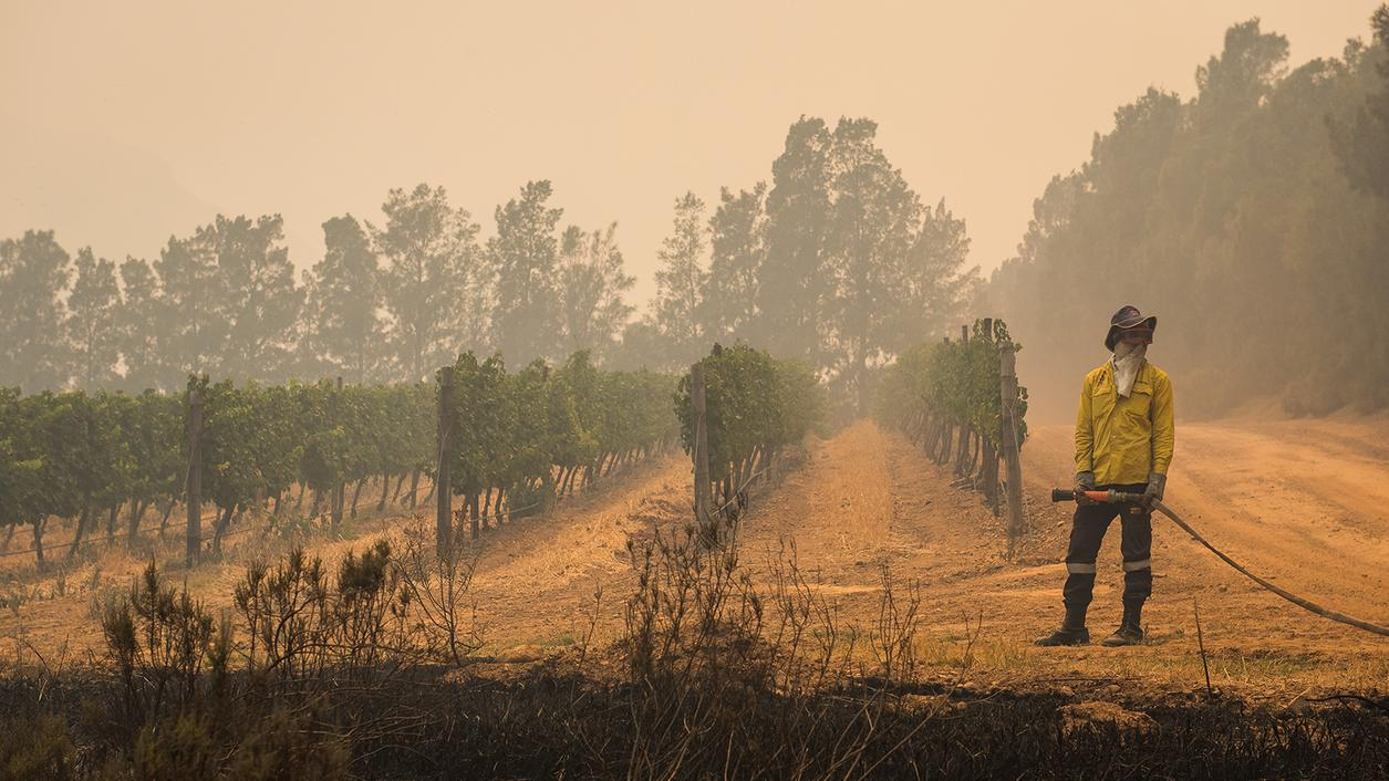 Wildfires Sweep Across South Africa Wine Country