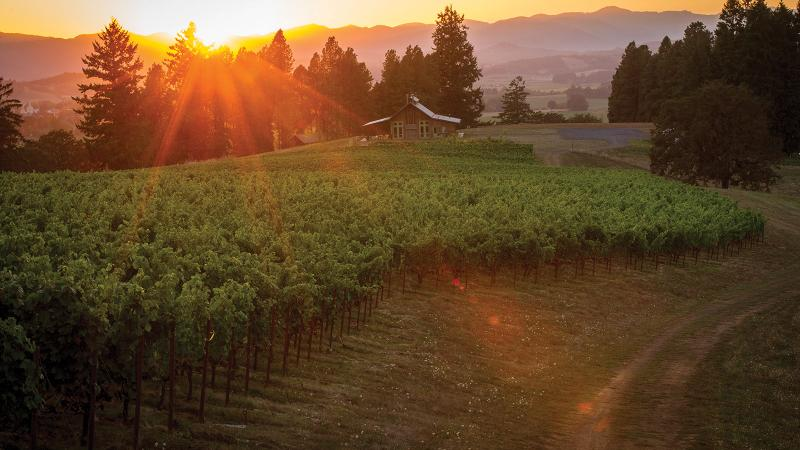 2008 Oregon Pinot Noir Retrospective: A Classic Vintage Revisited