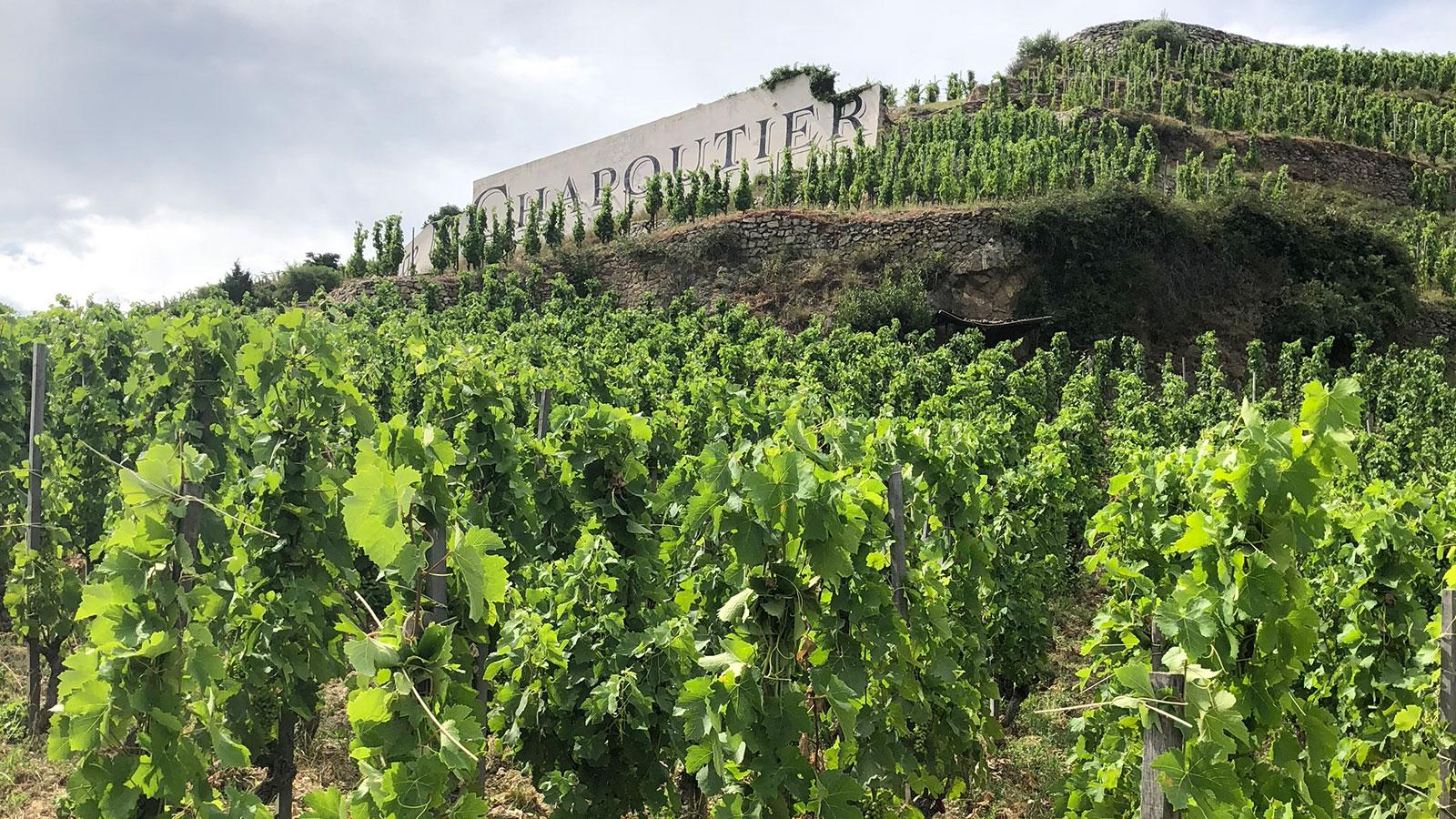 Chapoutier and the Northern Rhône are on a run of stellar vintages.