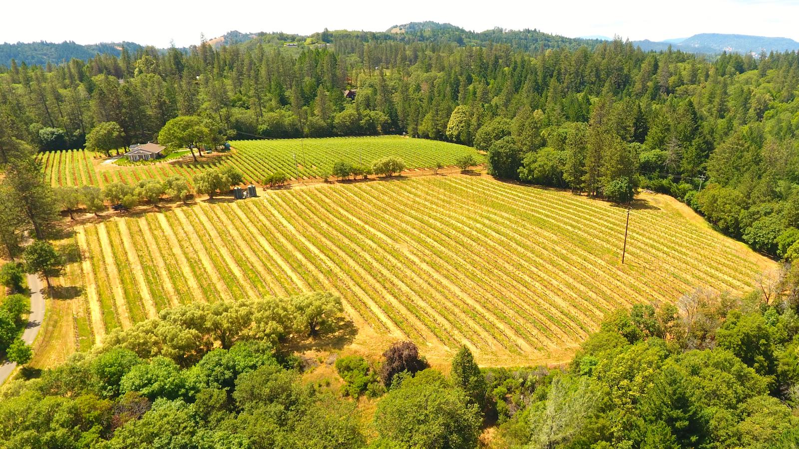 The Dunn family has been farming their mountain-top vineyard for nearly 40 years.