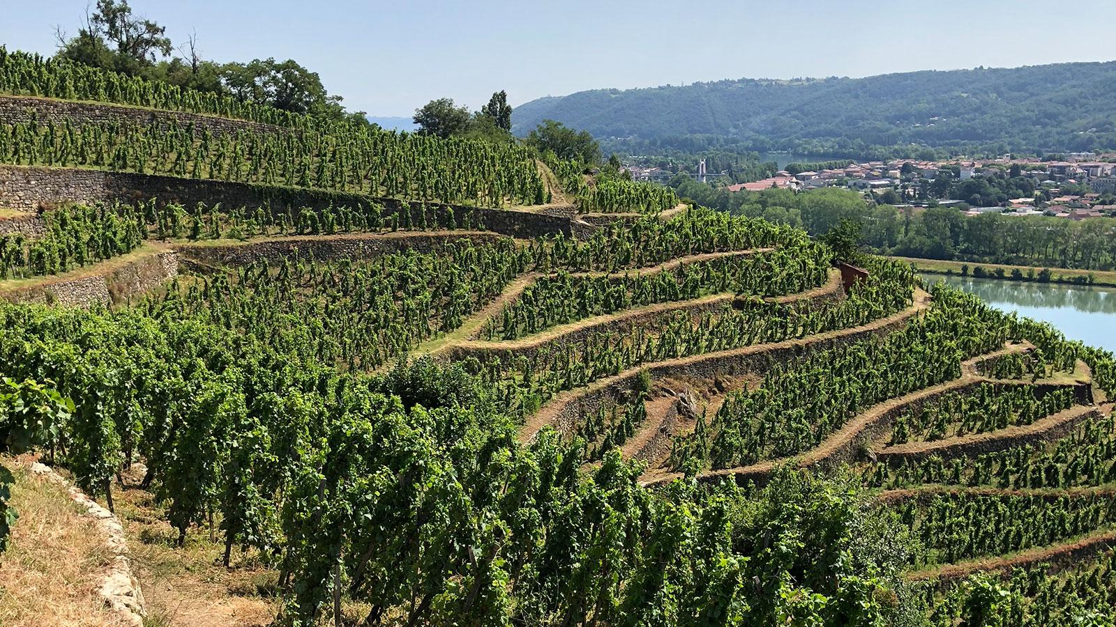 At just 9 acres, Château-Grillet is one of the smallest appellations in France.