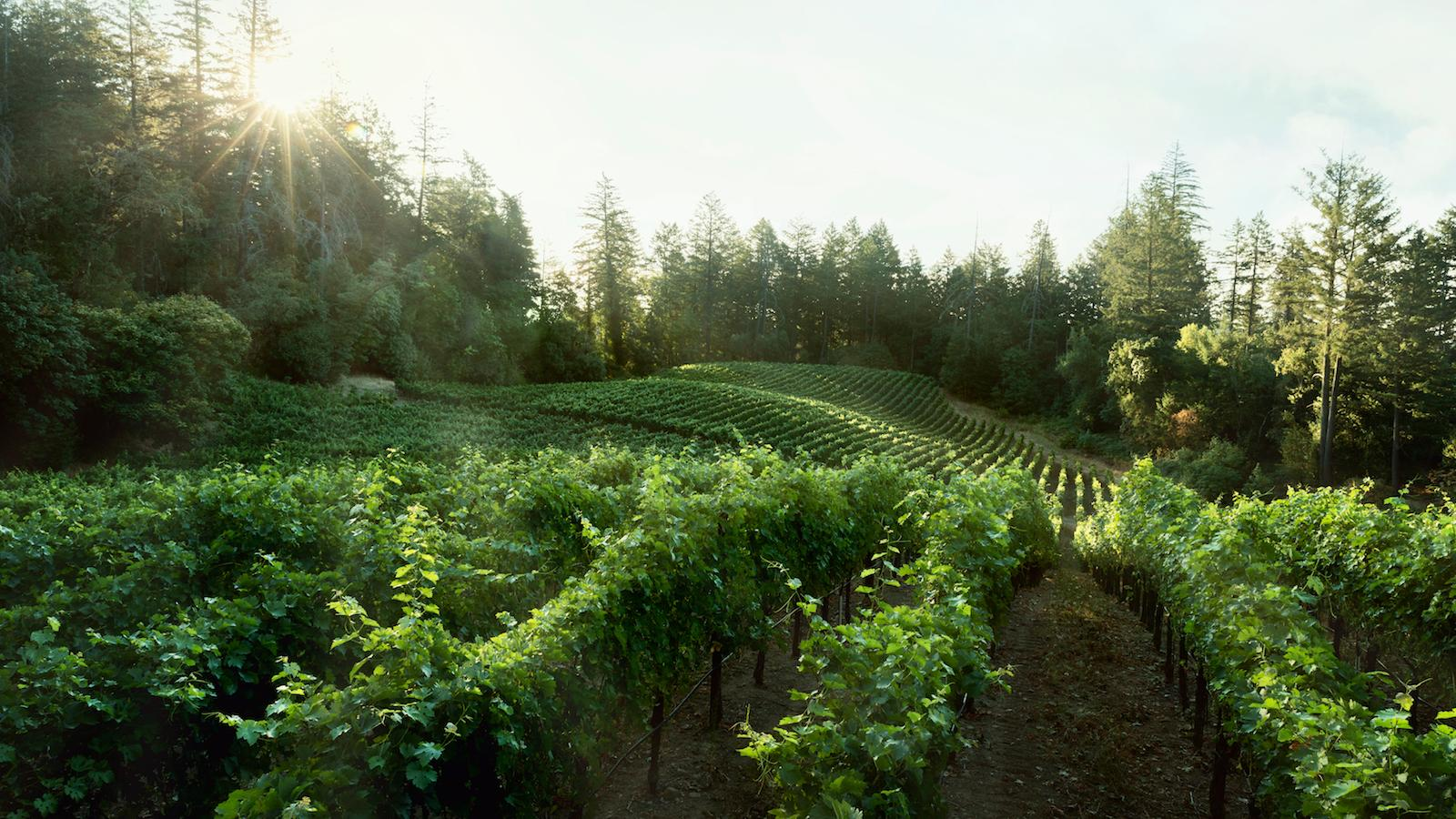 Lokoya's Spring Mountain District Cabernet draws on fruit from Yverdon vineyard, which Jackson Family purchased in 2013.
