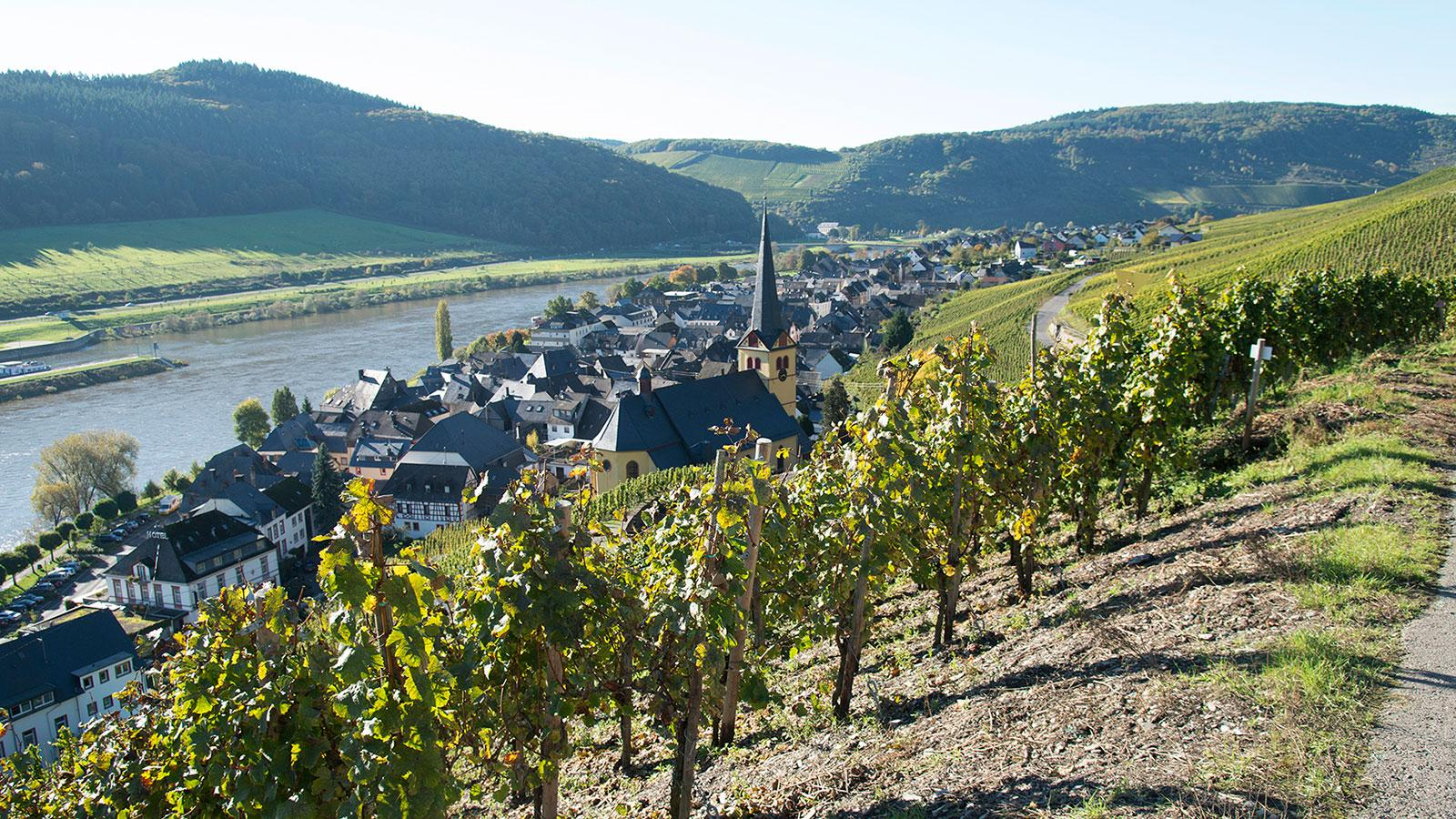 There are treasures to be found from the 2017 vintage in the Mosel, such as the Rieslings from Selbach-Oster.