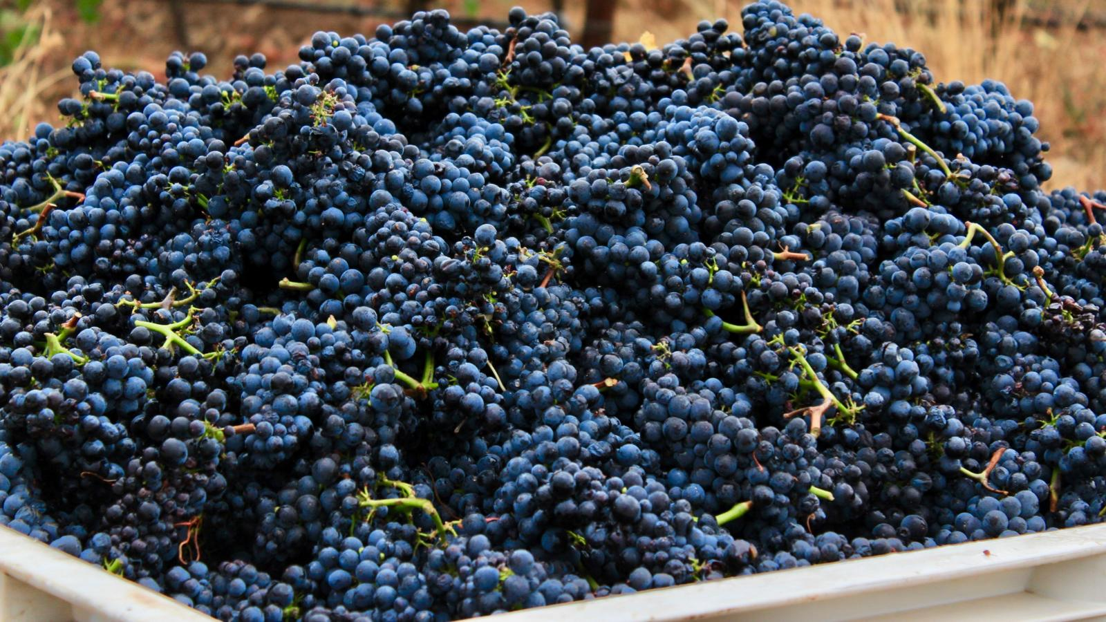 These grapes were grown, picked and vinified within Oregon's Willamette Valley.
