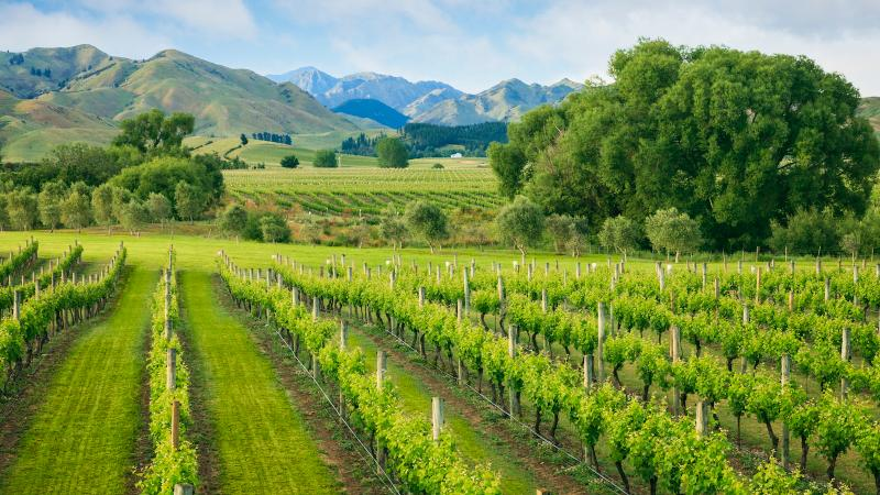 Do you know where your Marlborough Sauvignon Blanc was actually bottled?