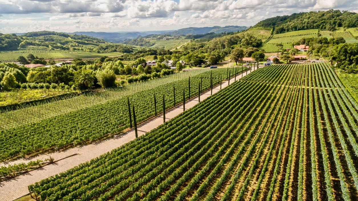 Can Brazil's Wine Industry Capture an American Audience?