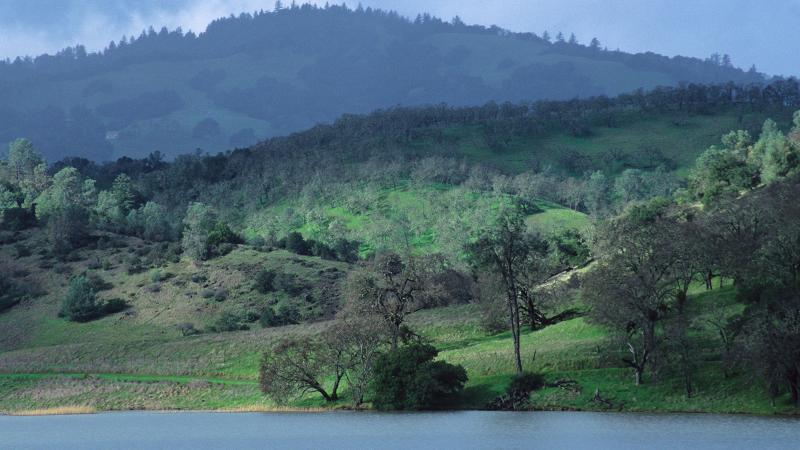 Napa is home to gorgeous vineyards and old oak forests.