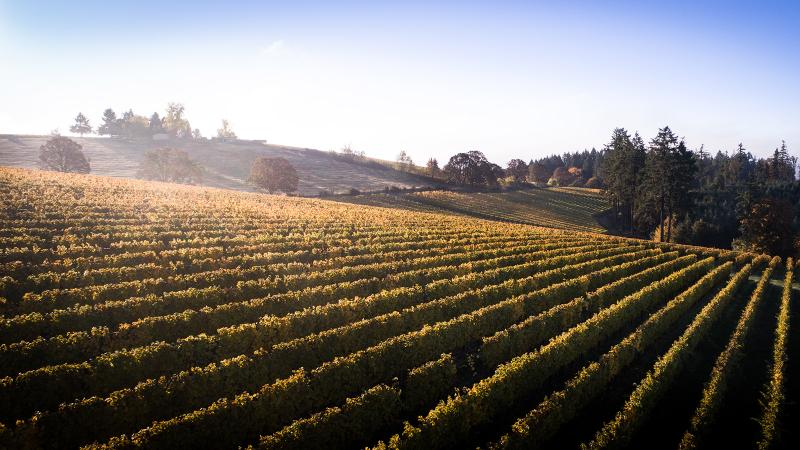 Vista Hills Vineyard enjoys an ideal location and soils in Oregeon's Dundee Hills area.